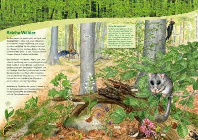 Lebensraum Wald