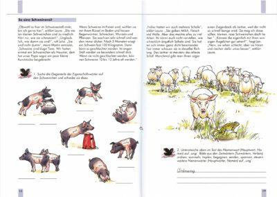 Klett Drachen Schwein_Schaf
