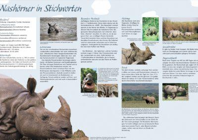 Infotafel Rhinozeros
