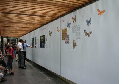 Wand im Schmetterlingshaus