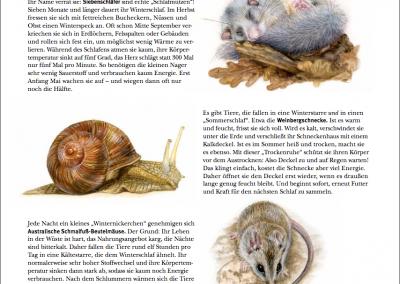 Illustrationen für das Wilhelmamagazin